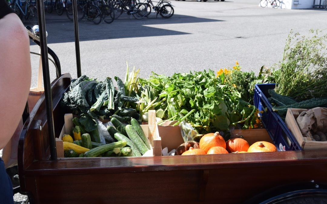 The Season of Fruits and Vegetables