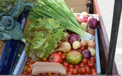 Fall and Winter Vegetables – Part 2!
