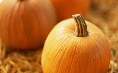 Fall and Winter Vegetable Favorites